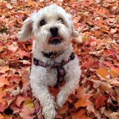 Eddie in the fall leaves